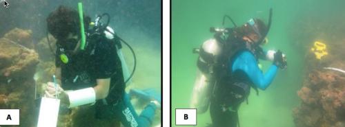 A – Mergulhador anota dados sobre planilha fixada em placa de PVC, modelo retangular. B – Mergulhadora usando como base para fixar a planilha um tubo de PVC fixado no braço. Fonte da fotografia B: C.Elliff.