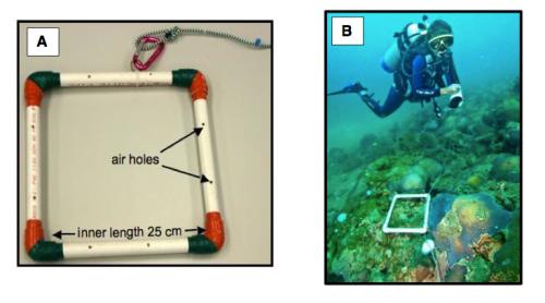 A. Quadrado de 25 cm X 25 cm construido com tubos de PVC para coleta dos dados de recrutas de coral. B – Os quadrados devem ser lançados ao longo dos transectos e os dados anotados no formulário de campo ilustrado na Tabela 1. Fonte da Figura A - Lang et al. 2010, AGRRA Protocol versão 5.4, da Figura B - A. Bertoncini.